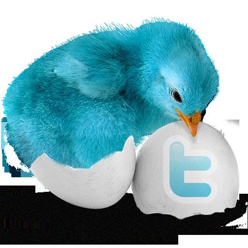 bluebird_500x500