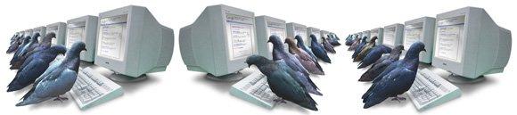 pigeon rank Google