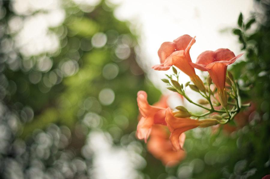 Ivy Flowers Wallpaper