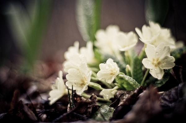 White Flowers in the Rain