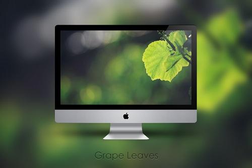 grape leaves wallpaper