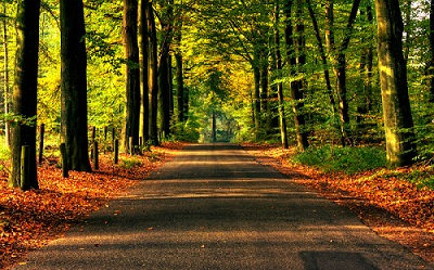 Road to Autumn Wallpaper