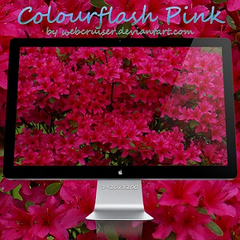 Colourflash Pink Flower Wallpaper