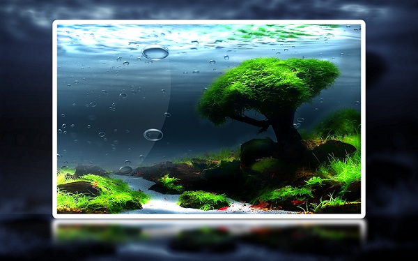 Underwater Landscape Wallpaper - Colorful Wallpaper for PC ...