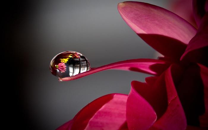 Water Drops On Flowers