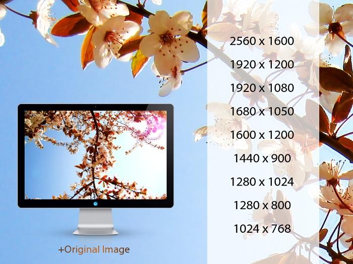 Kwiaty Flowers Wallpaper