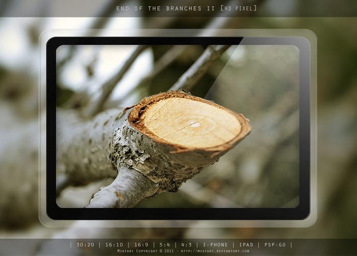 Cut End of the Tree Branch Wallpaper for PC, Mac, iPad, iPhone
