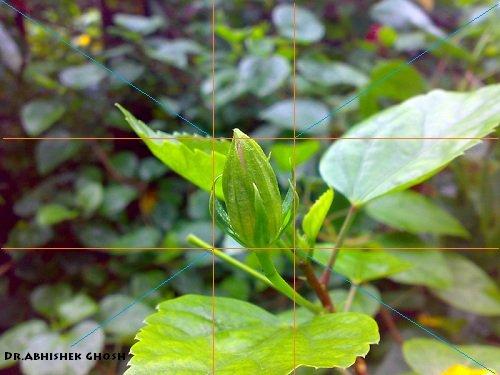 Depth of Field in Digital Photography