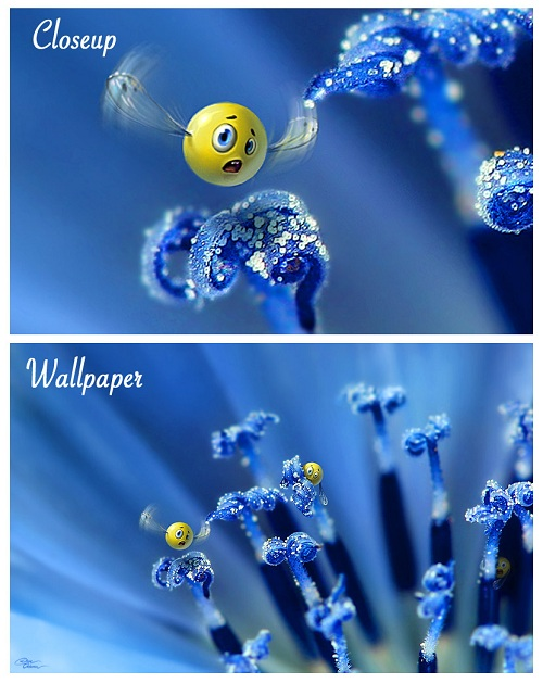 Wild Smilies Wallpaper