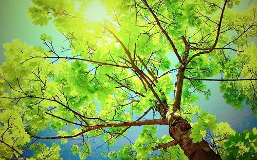 Dream Tree Wallpaper