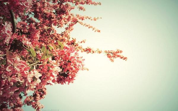 Spring Time Wallpaper