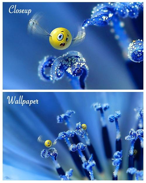 Wild Smilies Wallpaper
