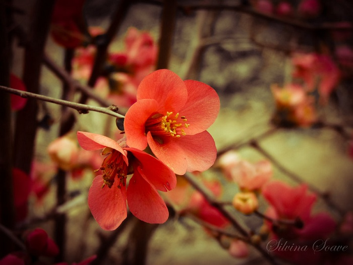 Cute Red Flower Wallpaper