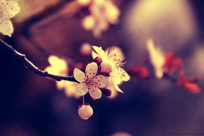 My beautiful Spring