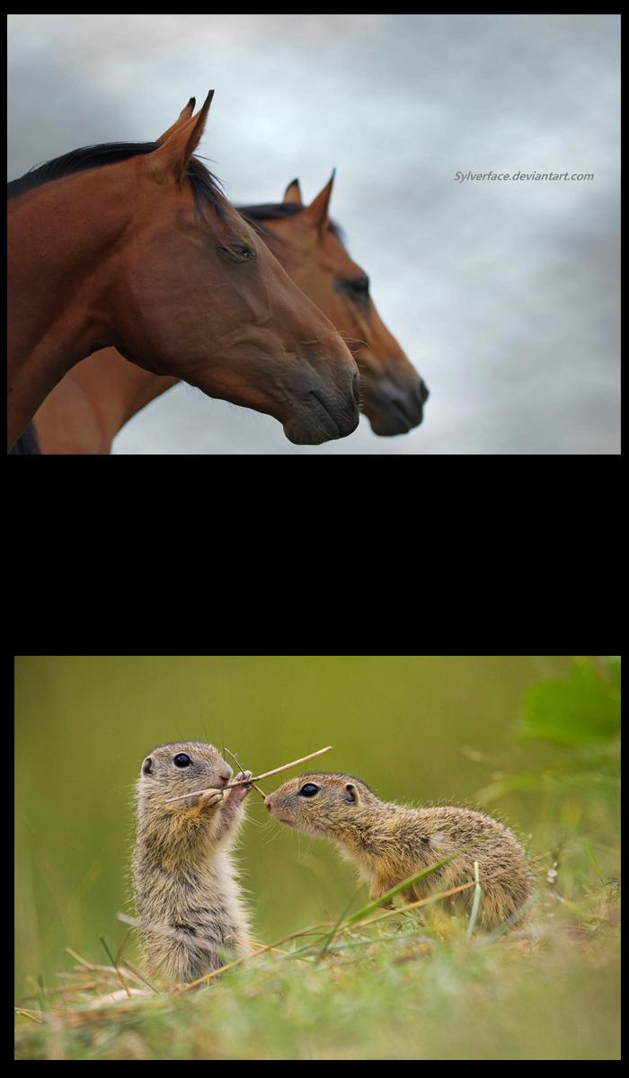 Animal-Photography-Tips